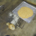 giant chocolate chip cookie made in oven for forming plastic for kayaks with dog named cj